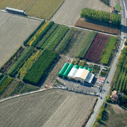 area-de-cultivo-1.png