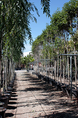 centros-de-jardineria-03.jpg