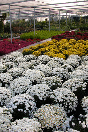 centros-de-jardineria-07.jpg