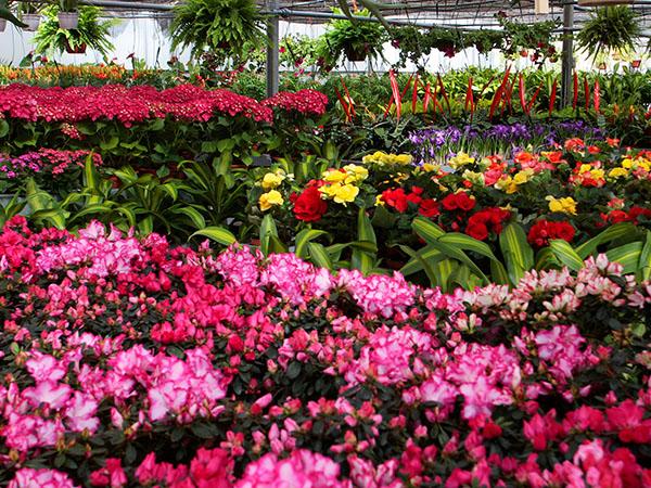 centros-de-jardineria-08.jpg