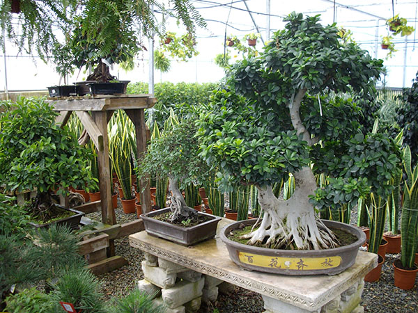 centros-de-jardineria-09.jpg