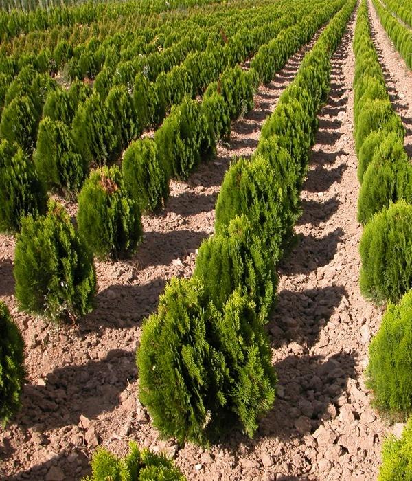 cultivos3.jpg